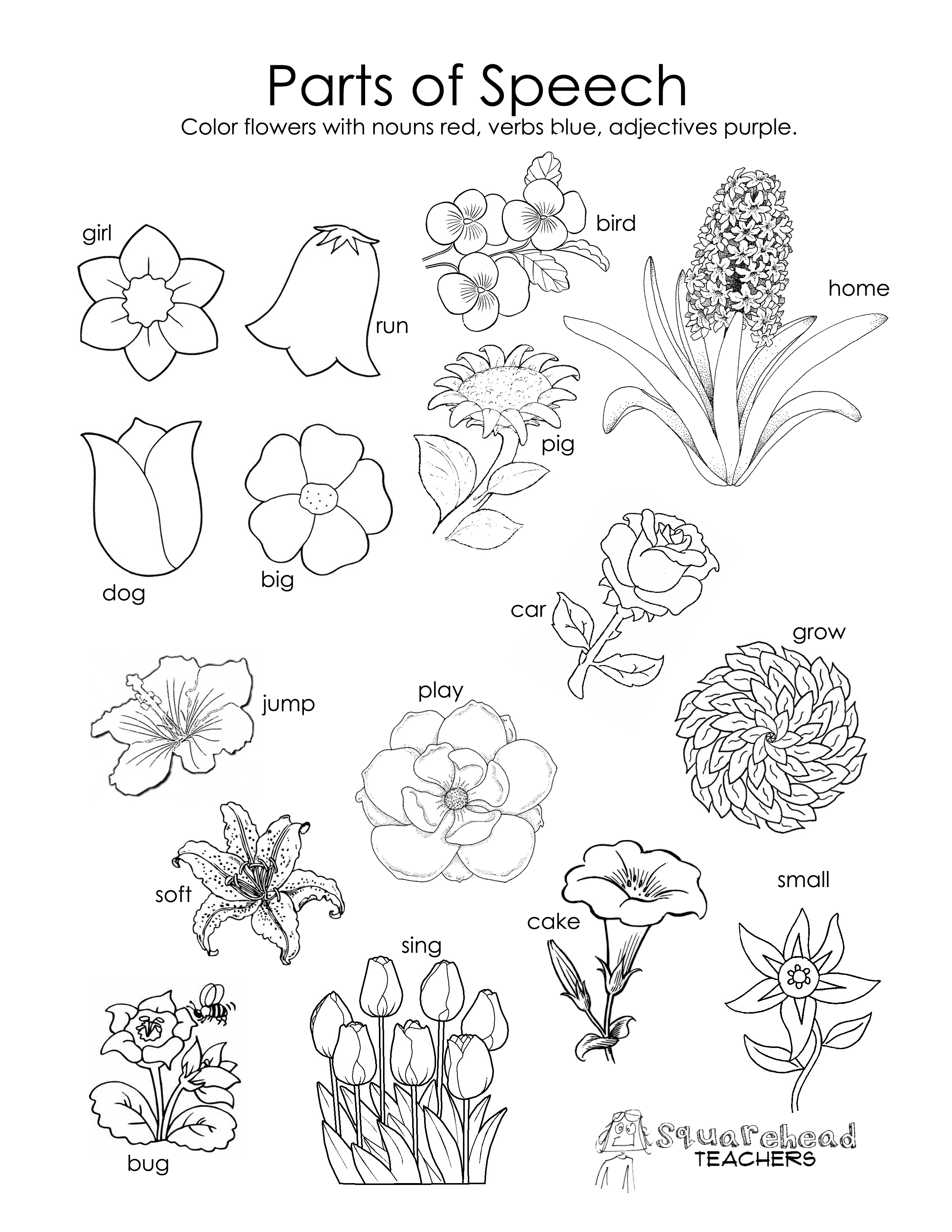 Coloring Pages Parts Of A Flower   Cooloring.com