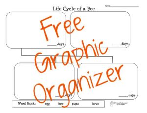 Bee Life Cycle STICKER