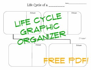 Life cycle graphic organizer blank STICKER