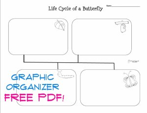 Life cycle of a butterfly 2 STICKER