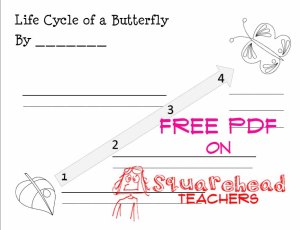 Life cycle of a butterfly STICKER