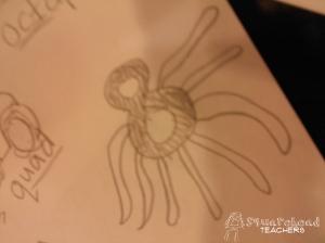octagon octopus